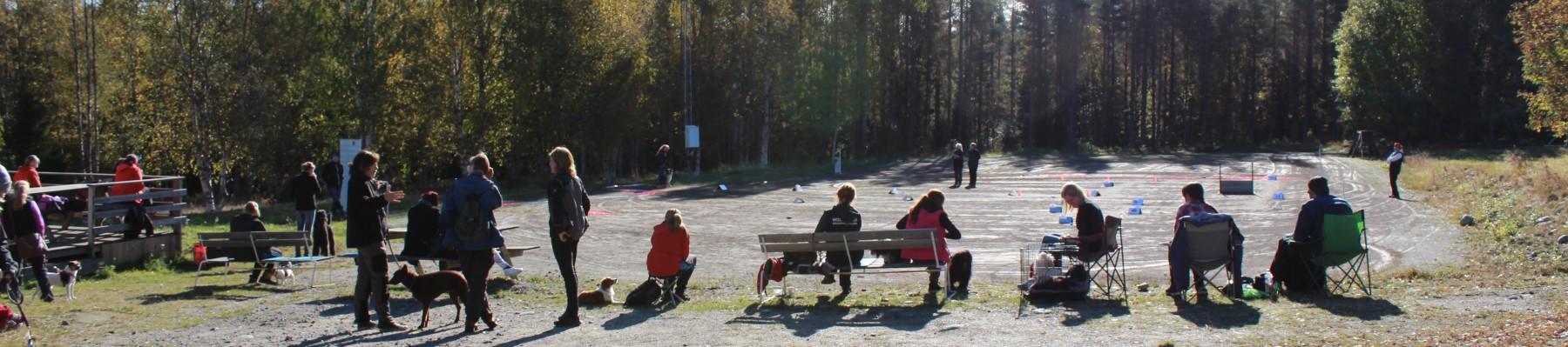 Holmsund brukshundklubb